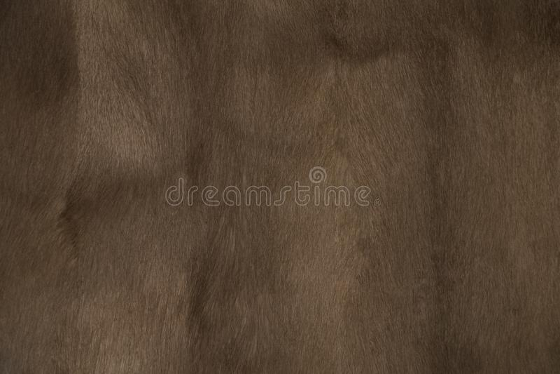 Textura del fondo de la piel del visión fotos de archivo libres de regalías