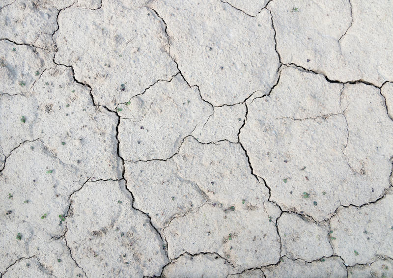 Textura del fondo del secado encima de la tierra agrietada con la pequeña planta fotografía de archivo libre de regalías