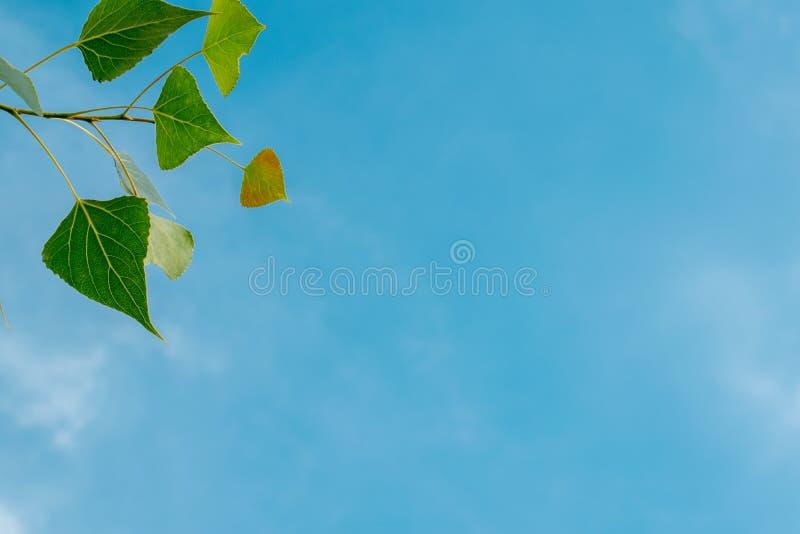 Textura del fondo natural, natural, brillante y de los ricos Cielo con las nubes Tiempo caliente imagen de archivo