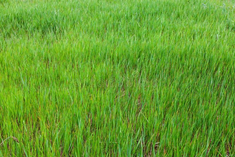 textura del fondo natural de la hierba verde fotos de archivo