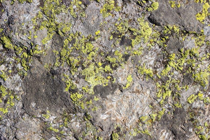 Textura del fondo natural, roca con el liquen imágenes de archivo libres de regalías