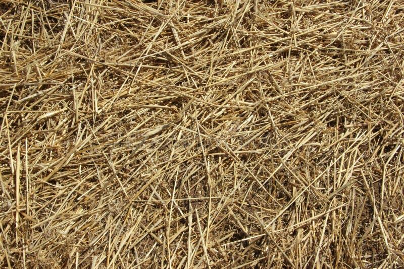 Textura del fondo Paja en un campo que se inclina en primavera fotos de archivo libres de regalías