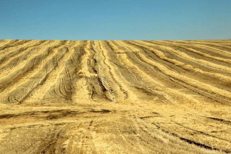 Textura del fondo Paja en un campo que se inclina en primavera fotos de archivo