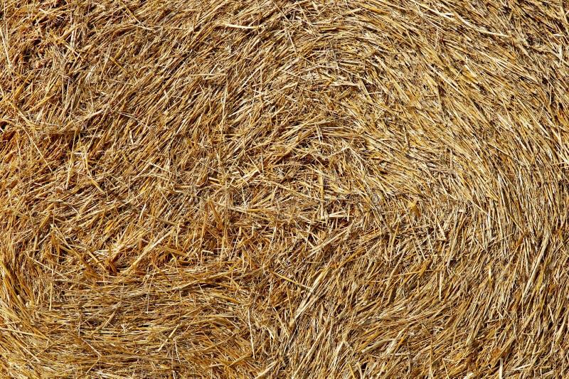 Textura del heno imagen de archivo libre de regalías