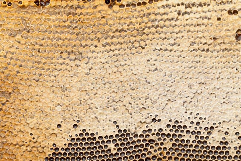 Textura del panal - cera de abejas imagen de archivo