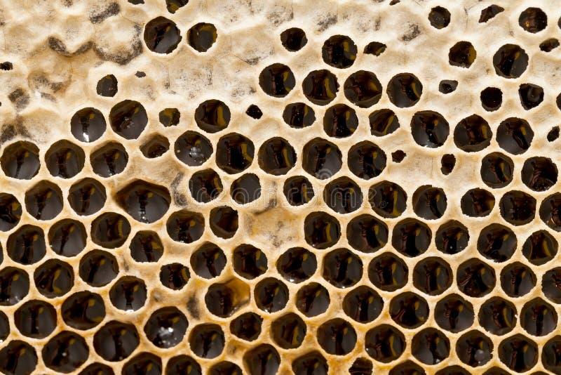 Textura del panal - cera de abejas imagen de archivo libre de regalías