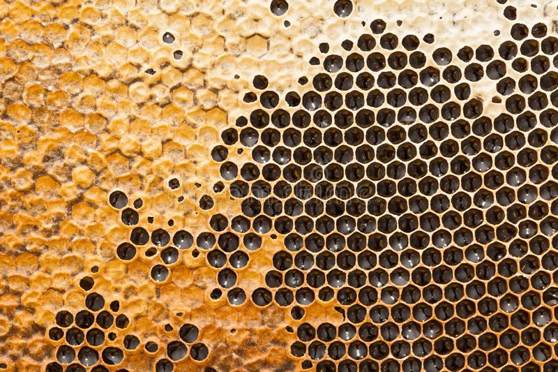 Textura del panal - cera de abejas fotografía de archivo libre de regalías