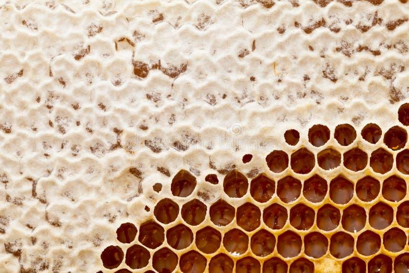 Textura del panal - cera de abejas foto de archivo libre de regalías