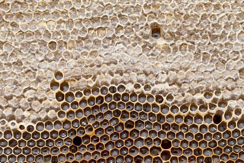 Textura del panal - cera de abejas fotos de archivo libres de regalías