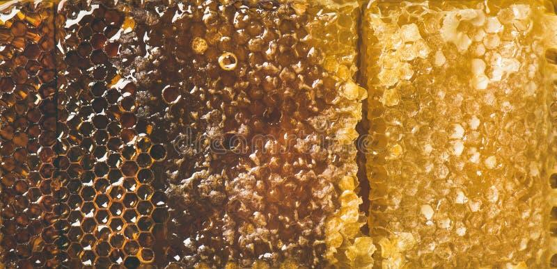 Textura del panal de la abeja, papel pintado y fondo, visión superior fotos de archivo
