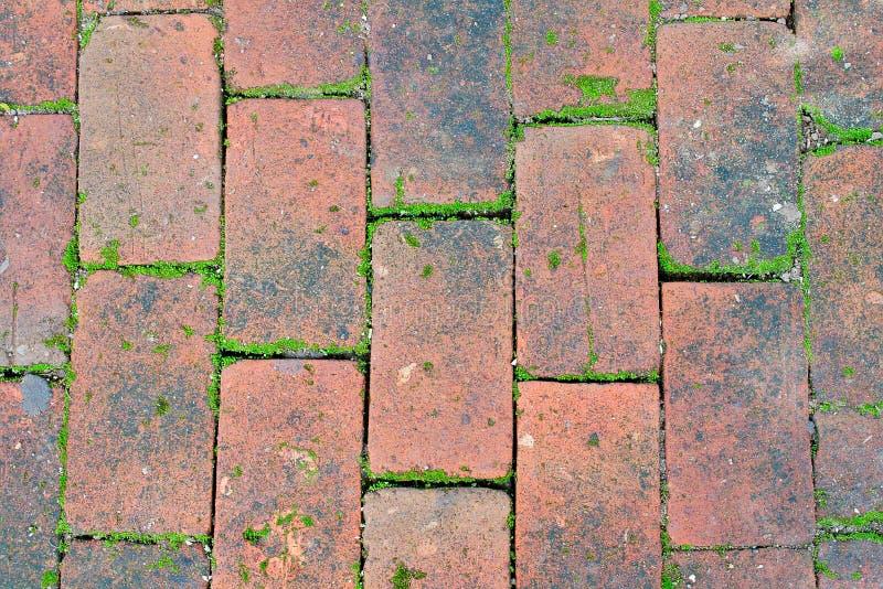 Textura del piso del ladrillo rojo con el musgo fotografía de archivo libre de regalías