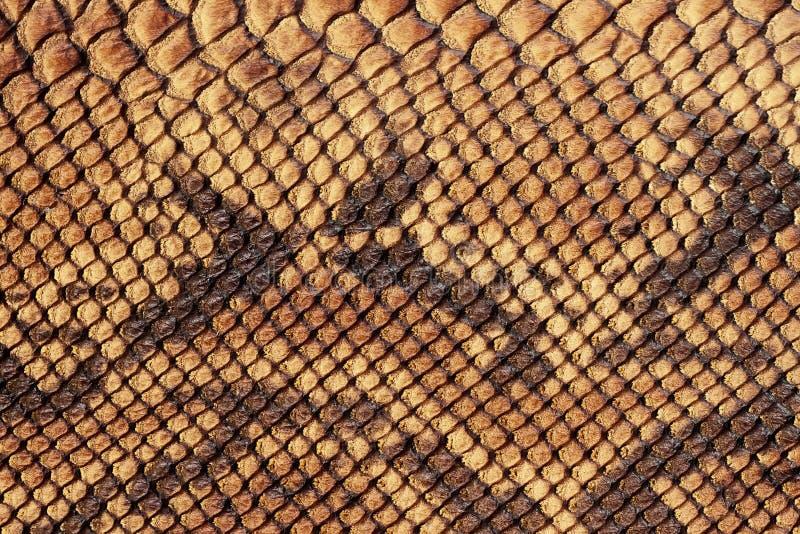 Textura del primer de cuero ?spero mate aut?ntico, grabada en relieve debajo de la piel del reptil marr?n escamoso Para el modelo fotografía de archivo libre de regalías