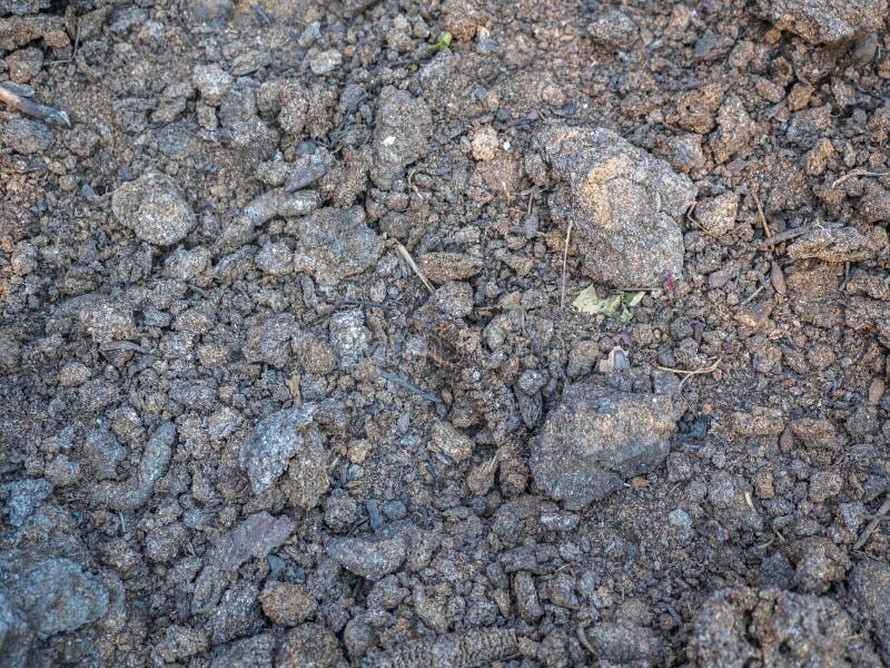 Textura del primer seco de la humus Suelo cultivado, tierra de la suciedad, fondo marrón de la tierra Agricultura orgánica, culti imagen de archivo libre de regalías