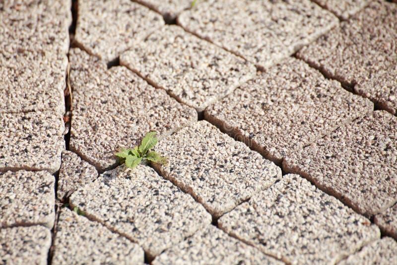 textura del suelo de piedra viejo foto de archivo