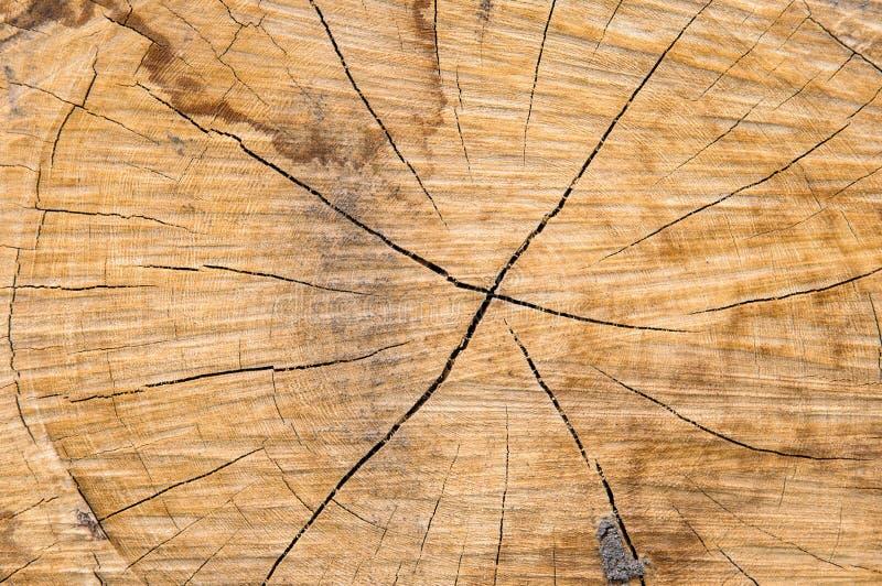 textura del tocón de árbol fotos de archivo libres de regalías