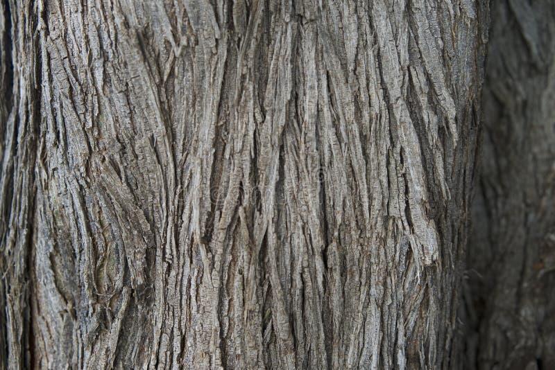 Textura del tronco de árbol imagen de archivo libre de regalías