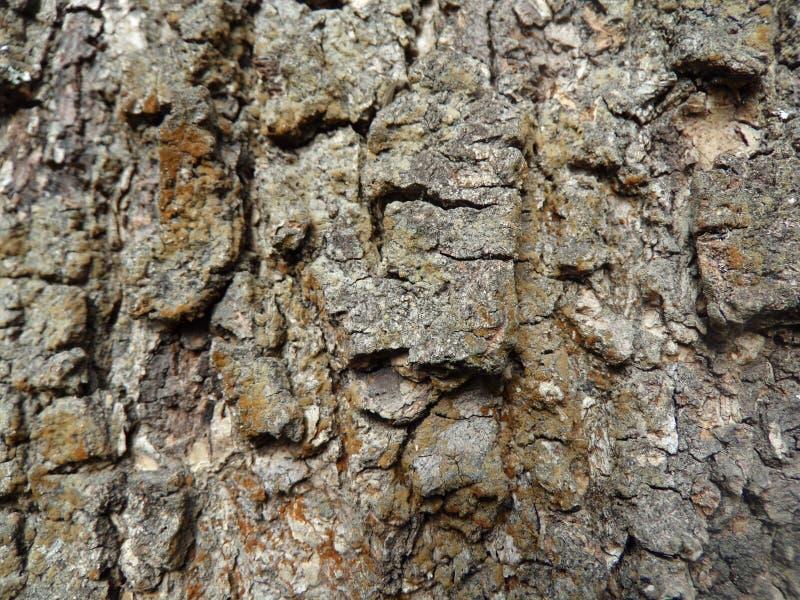 Textura del tronco de árbol foto de archivo