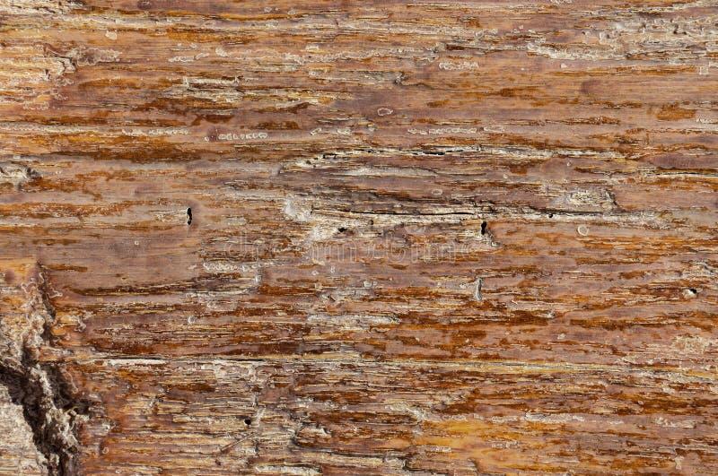 Textura del uso de madera como natural Tabl?n de madera marr?n del vintage para la textura o fondo para la disposici?n creativa c imágenes de archivo libres de regalías