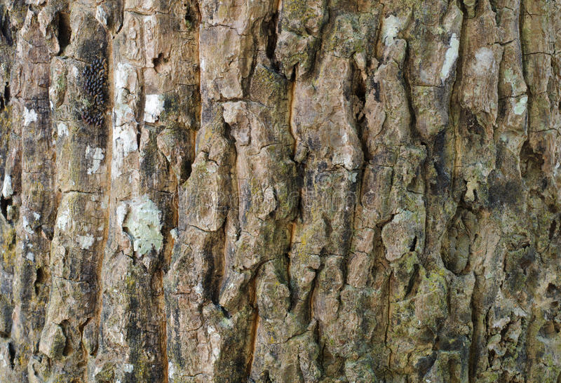 Textura detallada de la corteza de árbol Madera de la naturaleza foto de archivo
