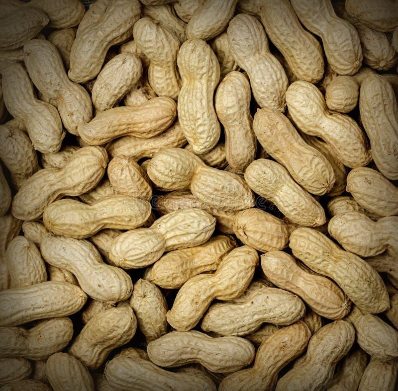 Textura do amendoim da fervura imagem de stock royalty free