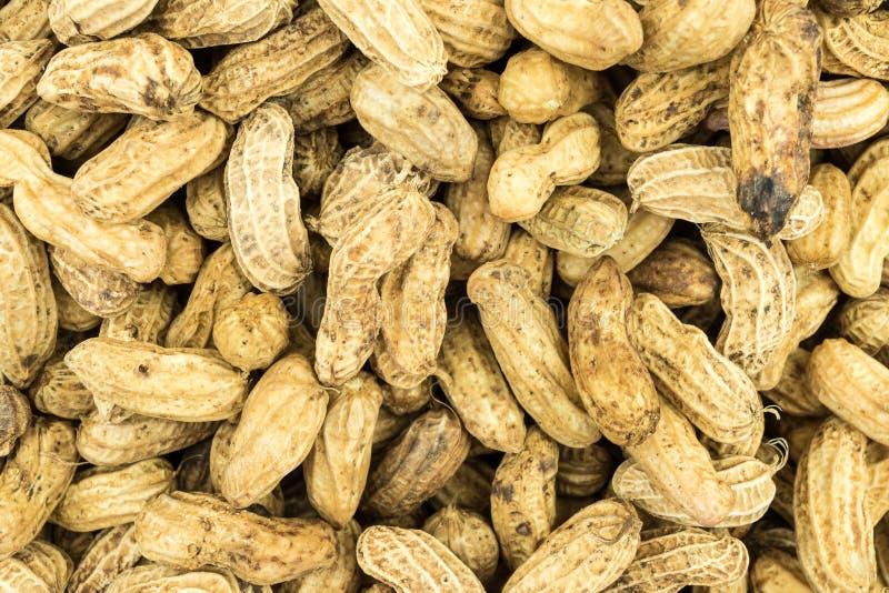 Textura do amendoim da fervura fotos de stock royalty free