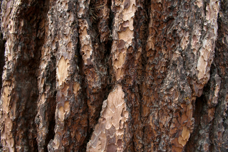 Textura do bosque de Mariposa foto de stock