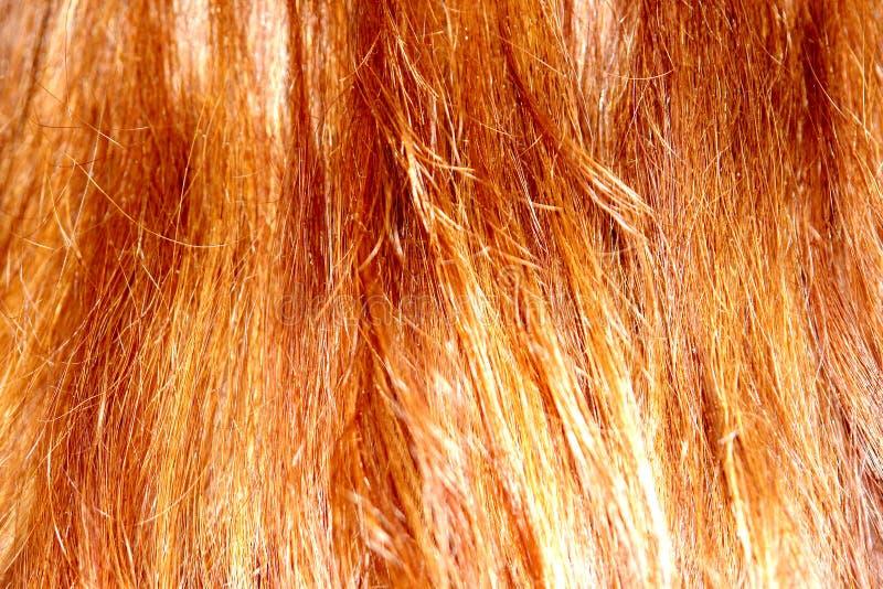 Textura do cabelo foto de stock royalty free