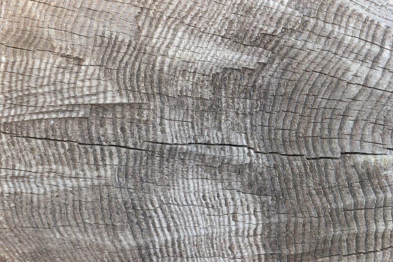 Textura do close-up cortado velho do log, tronco de árvore imagem de stock royalty free