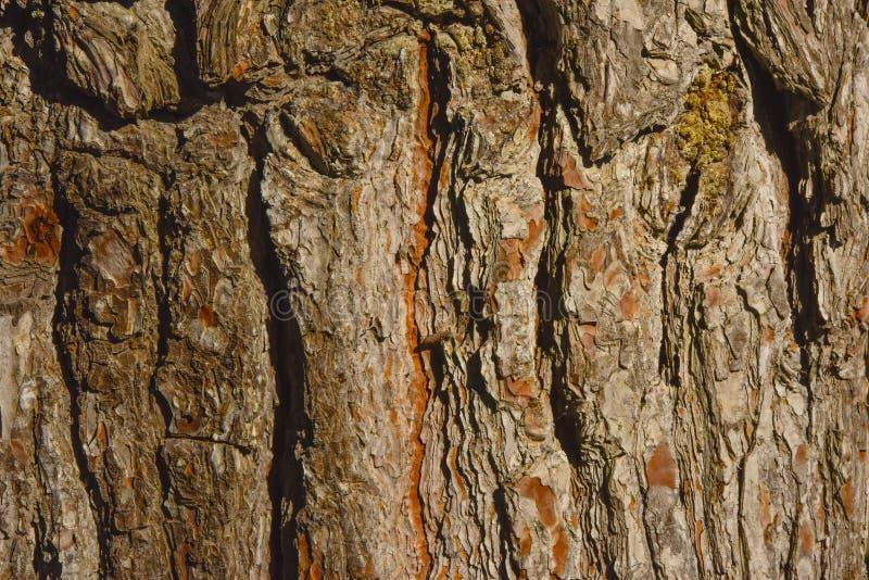Download Textura Do Close Up Da Casca De árvore Imagem de Stock - Imagem de macro, ambiente: 65577189