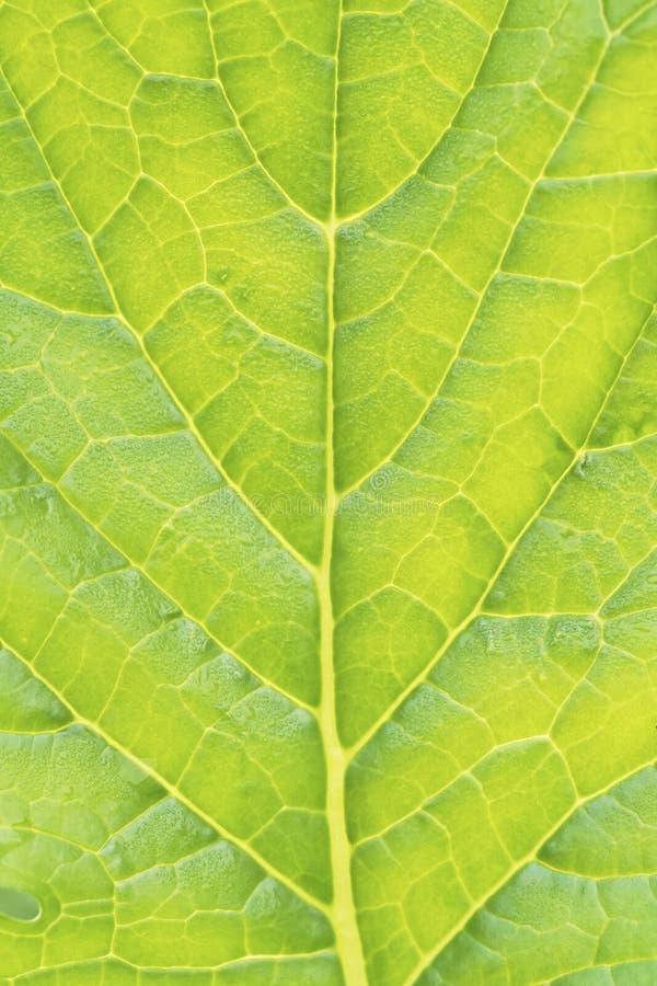 Textura do close-up vegetal verde da folha foto de stock royalty free