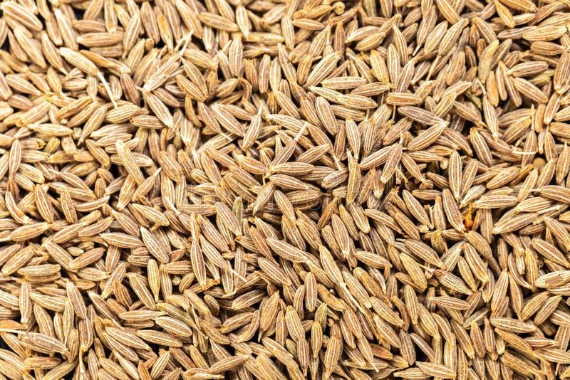 Textura do cominhos seco das especiarias fotografia de stock