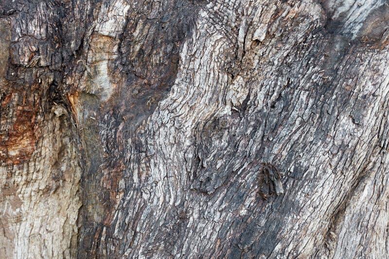 Textura do corpo da árvore imagens de stock royalty free