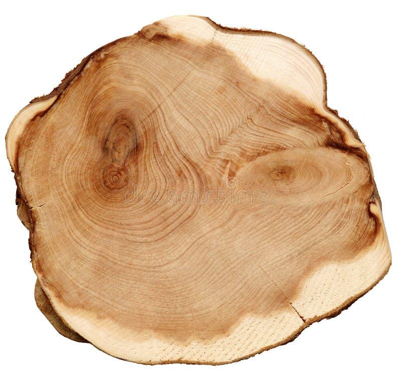 Textura do corte da madeira isolada no branco imagem de stock