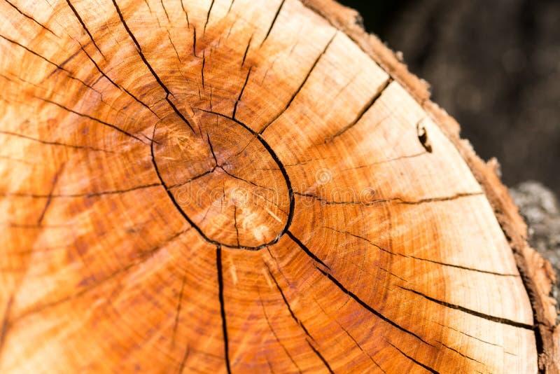 Textura do corte de uma árvore fotos de stock royalty free