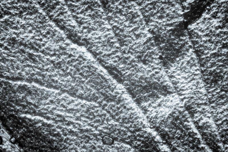 Textura do detalhe da asa do inseto imagem de stock royalty free