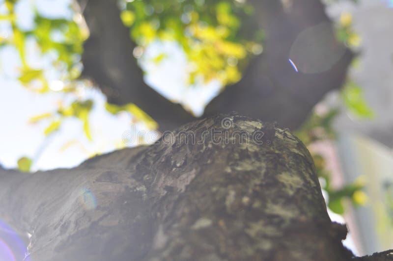 Textura do detalhe do ramo de árvore com efeito do bokeh fotos de stock royalty free