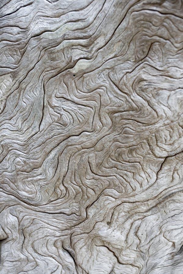 Textura do Driftwood fotografia de stock royalty free