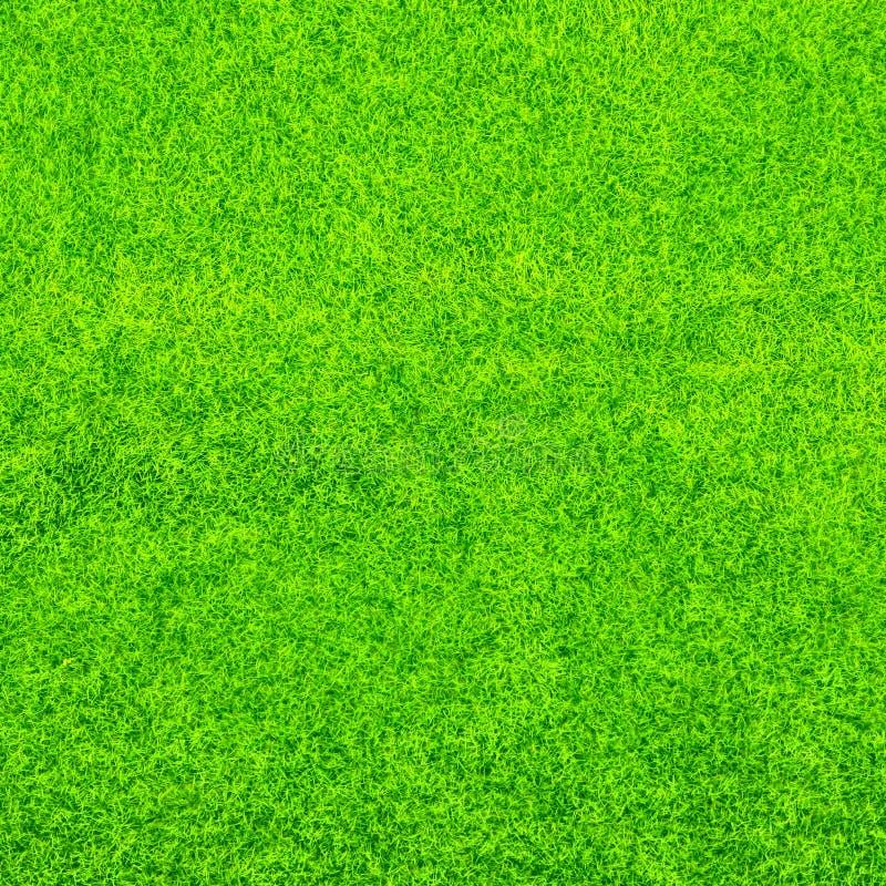 Textura do fundo da grama verde imagem de stock