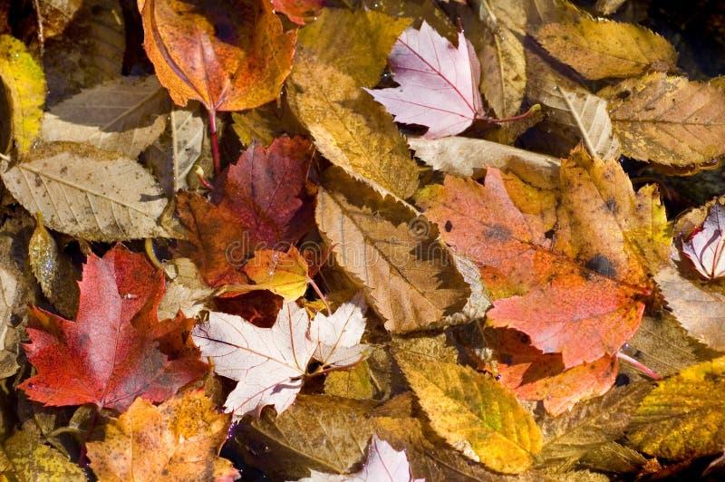 Textura do fundo das folhas de outono fotos de stock
