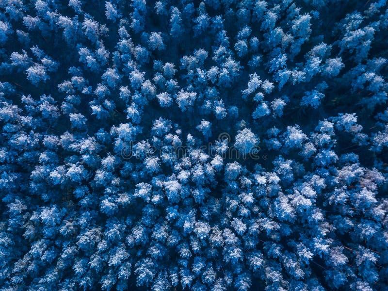 Textura do fundo de uma floresta congelada no inverno, tiro aéreo imagem de stock royalty free