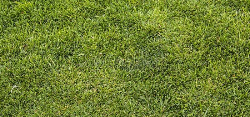 Textura do fundo do gramado verde-claro imagem de stock royalty free