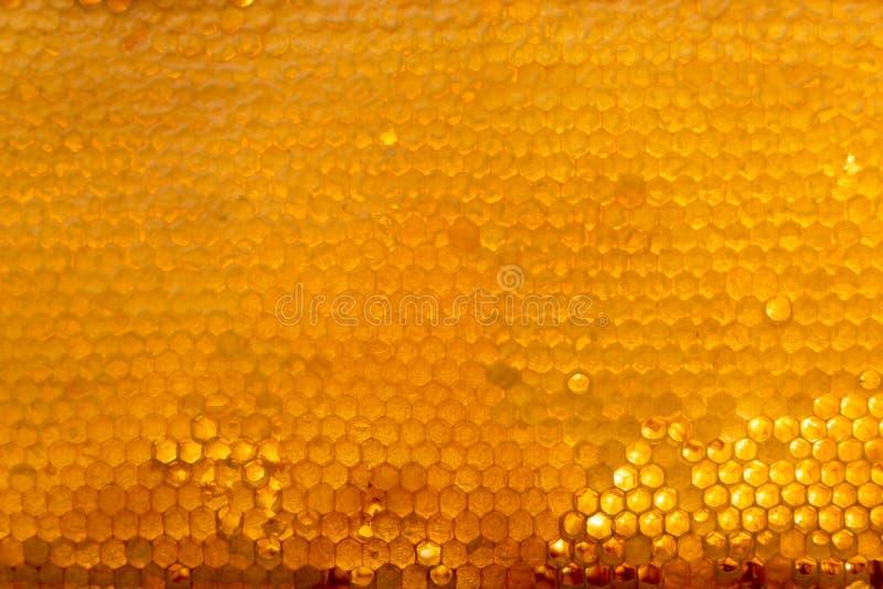 A textura do fundo e o teste padrão de uma seção do favo de mel da cera de uma colmeia da abelha encheram-se com o mel dourado imagem de stock