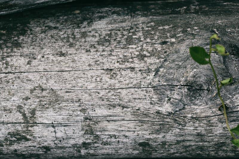 Textura do fundo natural de madeira velho Madeira cinzenta velha foto de stock