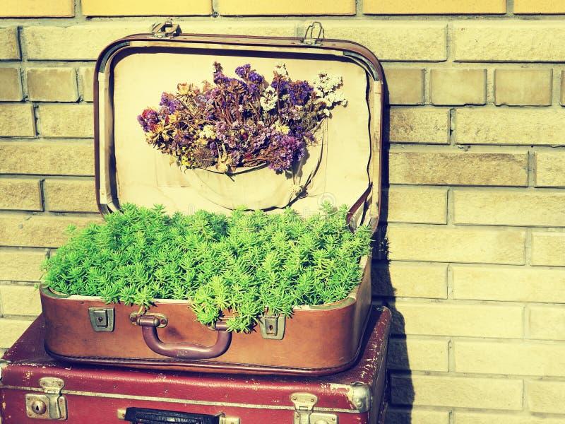 Textura do fundo Valise retro velho das malas de viagem do vintage em placas de madeira Recolhendo o recolhimento na maneira de e foto de stock royalty free