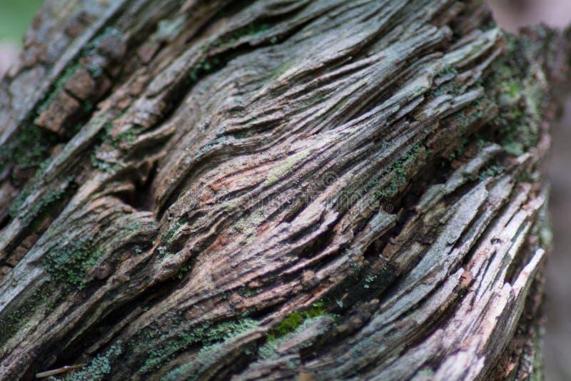 Textura do log da árvore fotografia de stock