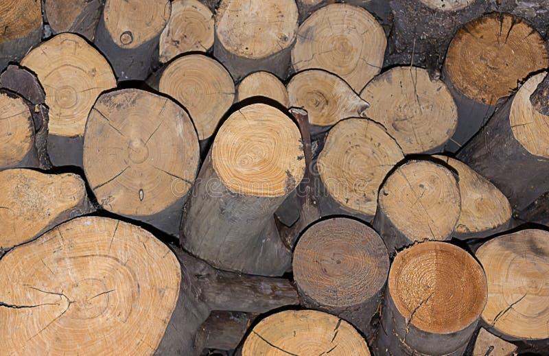 Textura do log tronco de madeira do fundo do pinho derramado imagens de stock