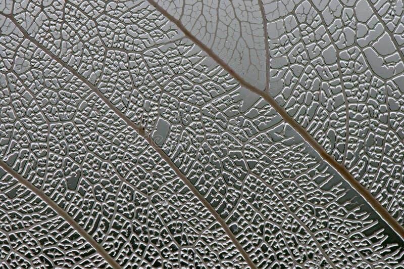 Textura do macro da folha fotografia de stock royalty free