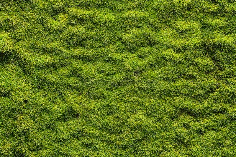 Textura do musgo