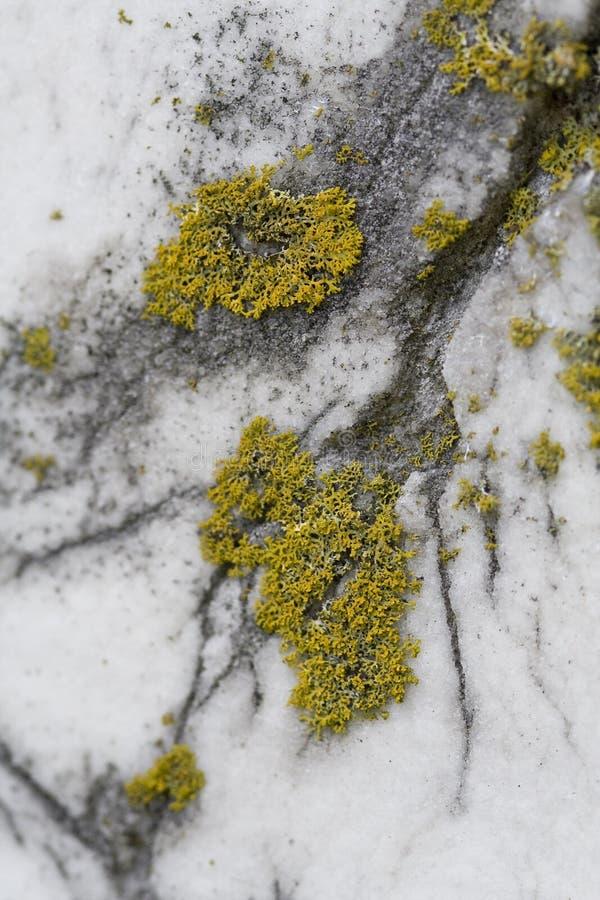 Textura do musgo e do mármore imagem de stock royalty free