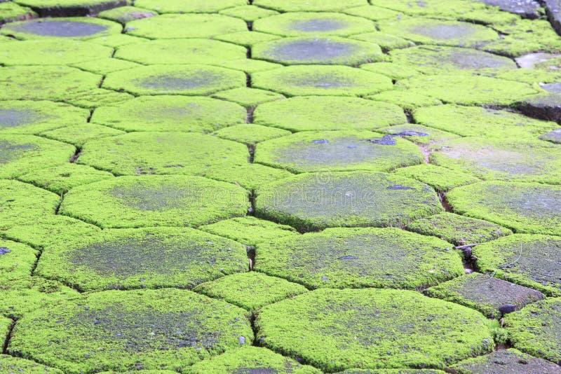 Textura do musgo, fundo foto de stock royalty free